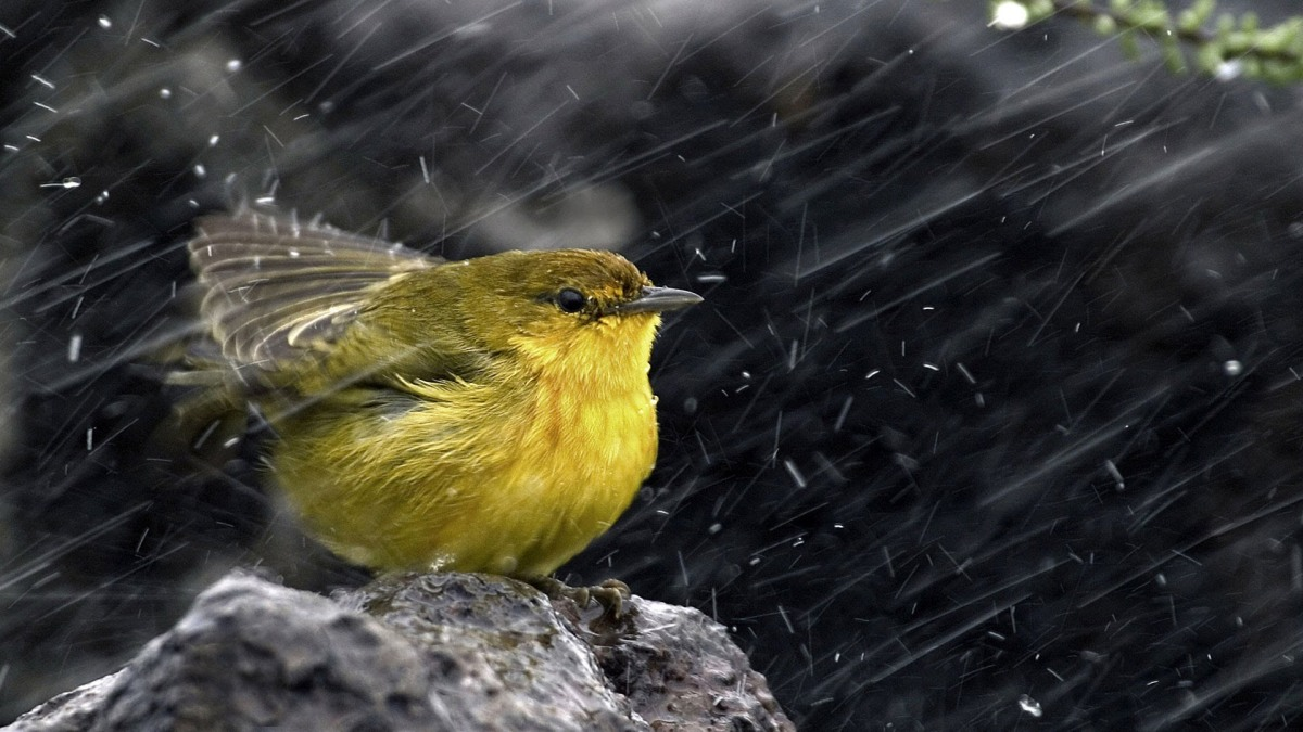 A Bird in the Storm